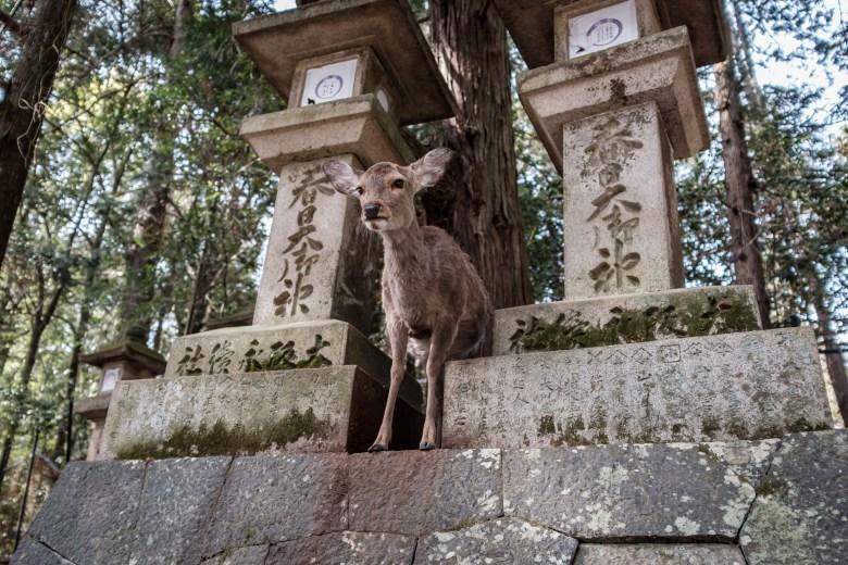 Japan Nara 45
