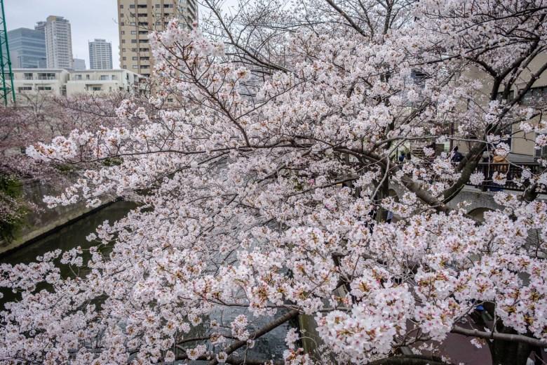 Japan Tokyo 009