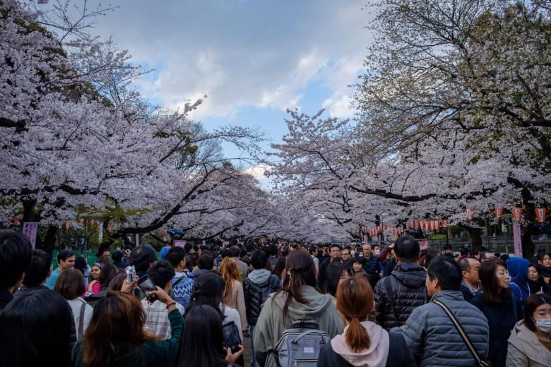 Japan Tokyo 043