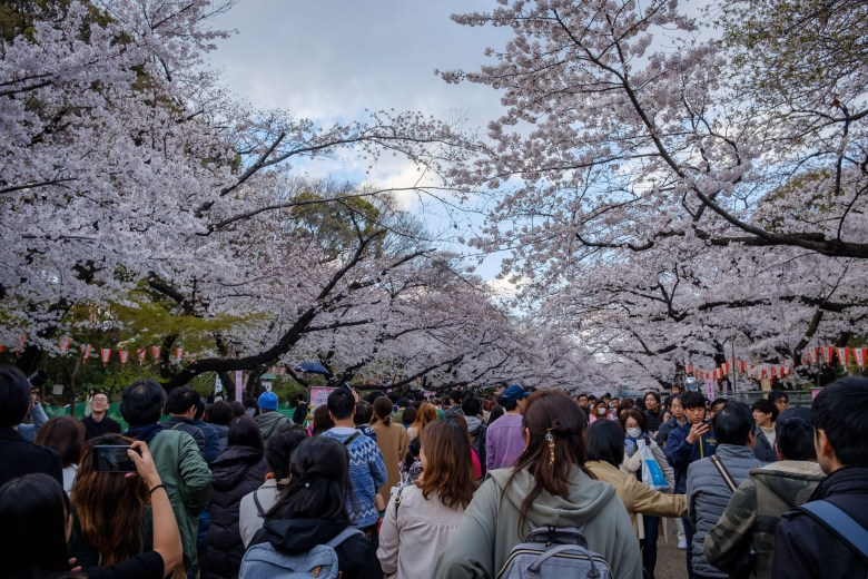 Japan Tokyo 044