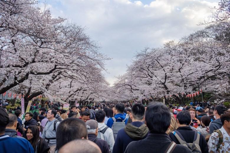 Japan Tokyo 049