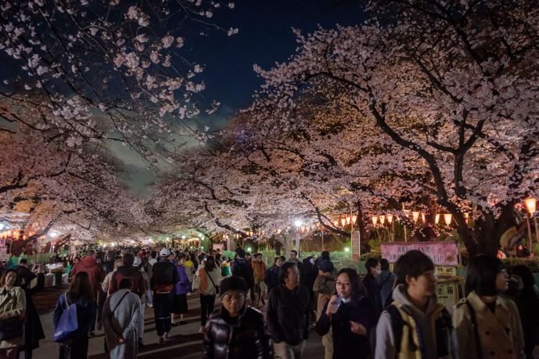 Japan Tokyo 057