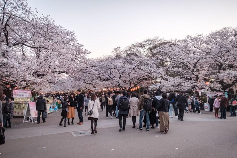 Japan Tokyo 251