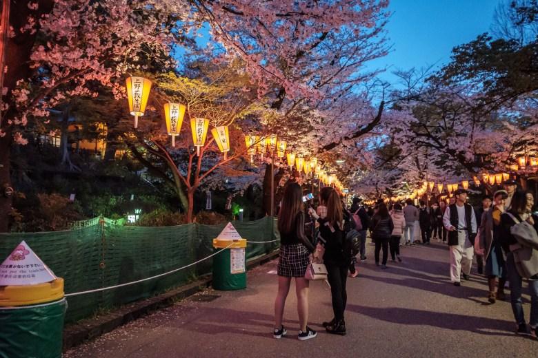 Japan Tokyo 257