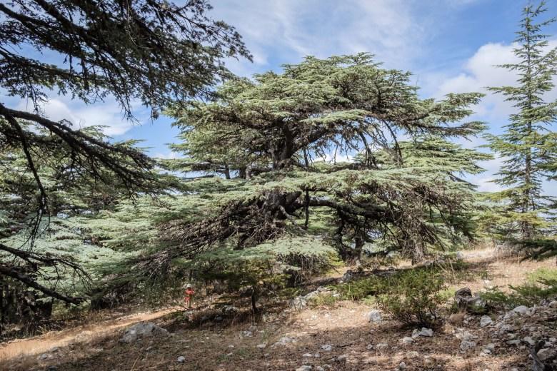 Lebanon Barouk 08