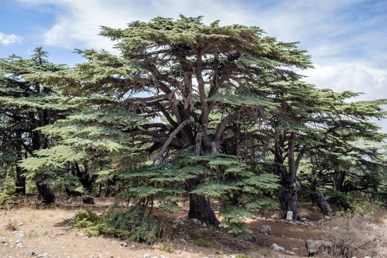 Lebanon Barouk 09