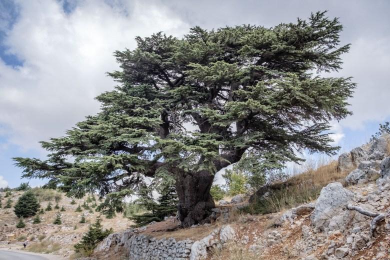 Lebanon Barouk 14