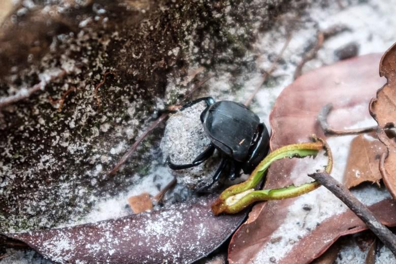 Malaysia Bako National Park 022