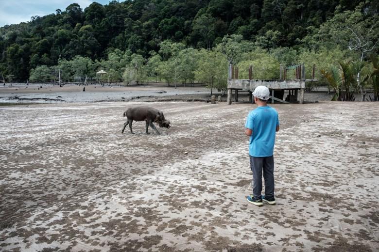 Malaysia Bako National Park 029