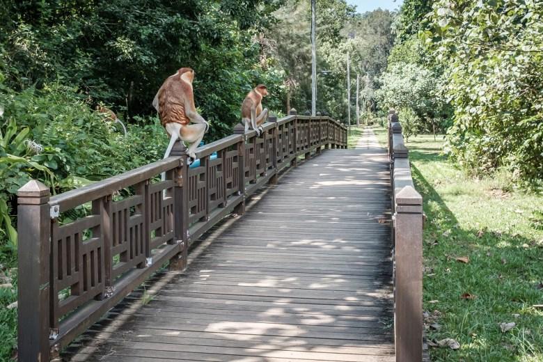 Malaysia Bako National Park 036