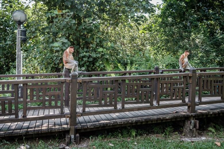 Malaysia Bako National Park 037