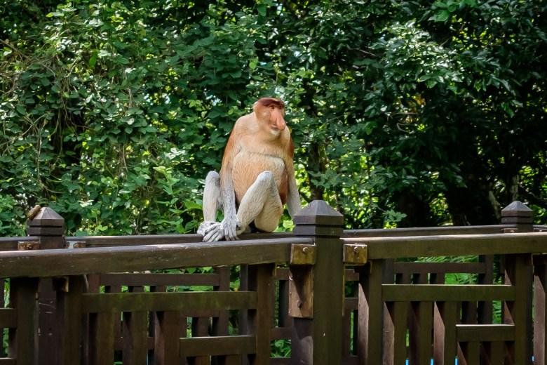Malaysia Bako National Park 042