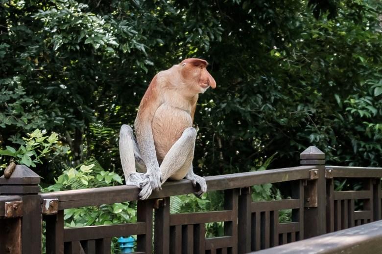 Malaysia Bako National Park 045