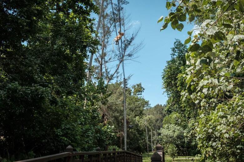Malaysia Bako National Park 046