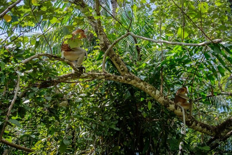 Malaysia Bako National Park 047