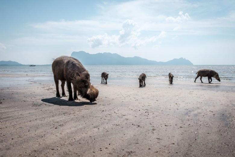Malaysia Bako National Park 053