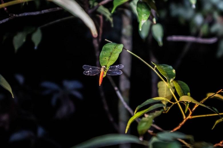 Malaysia Bako National Park 077