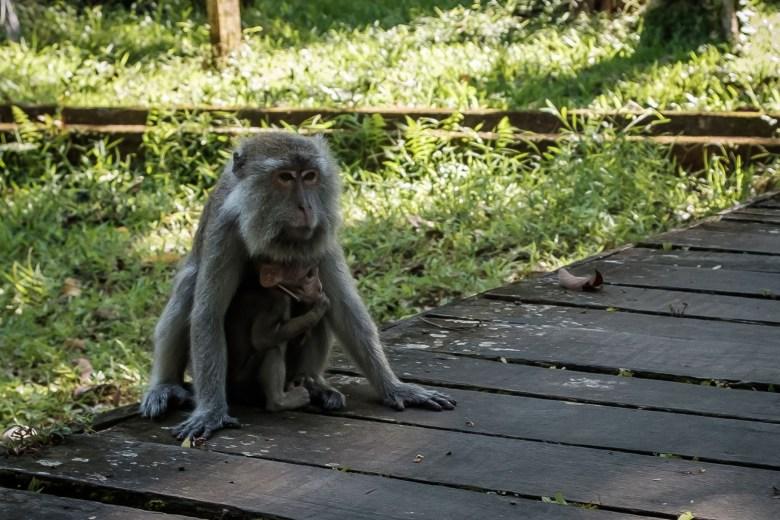 Malaysia Bako National Park 086