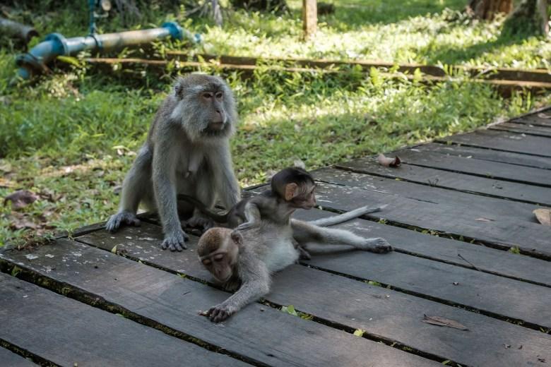 Malaysia Bako National Park 090