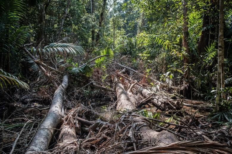 Malaysia Bako National Park 092