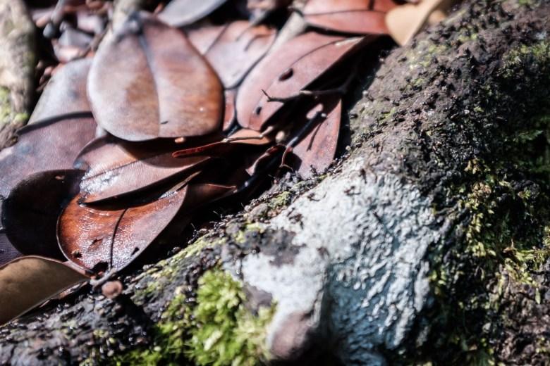 Malaysia Bako National Park 093