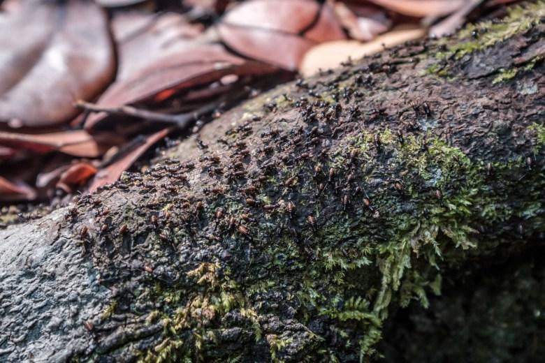 Malaysia Bako National Park 094