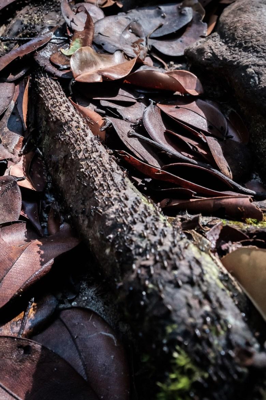 Malaysia Bako National Park 095