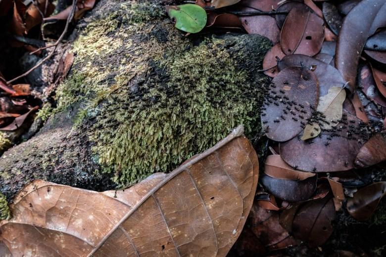 Malaysia Bako National Park 096
