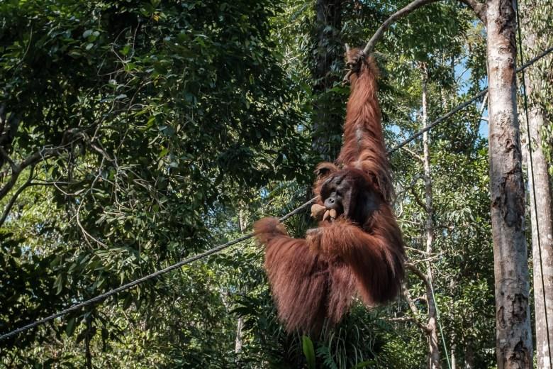 Malaysia Kuching 089