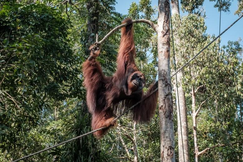 Malaysia Kuching 095
