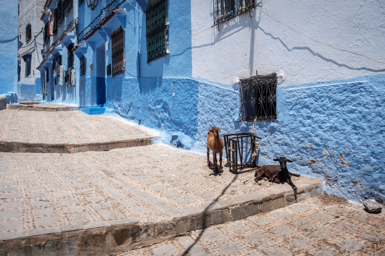 Morocco Chefchaouen 71