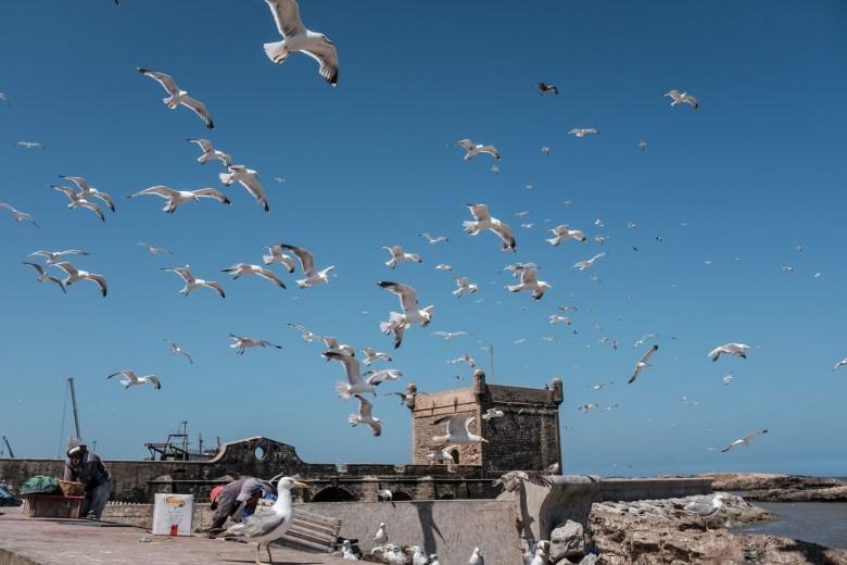 Morocco Essaouira 03