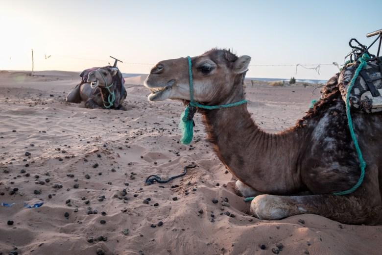 Morocco Merzouga 110