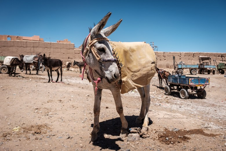 Morocco Rissani 11