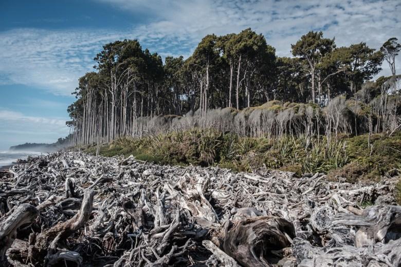 New Zealand Bruce Bay 15