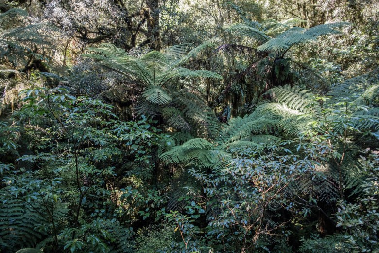New Zealand Milford Sound 15