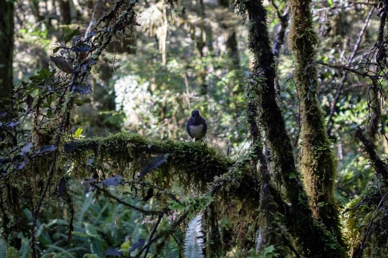 New Zealand Queenstown 049