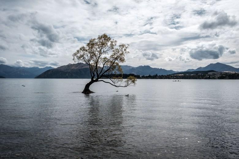 New Zealand Wanaka 1