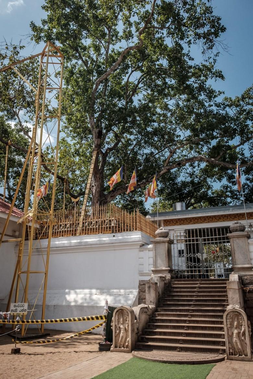Sri Lanka Anuradhapura 12