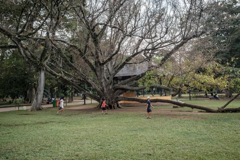 Sri Lanka Colombo 08