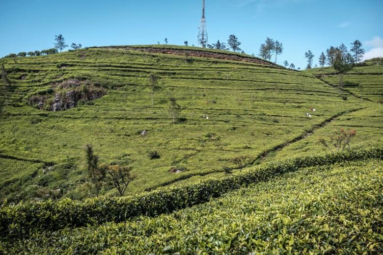 Sri Lanka Ella 36