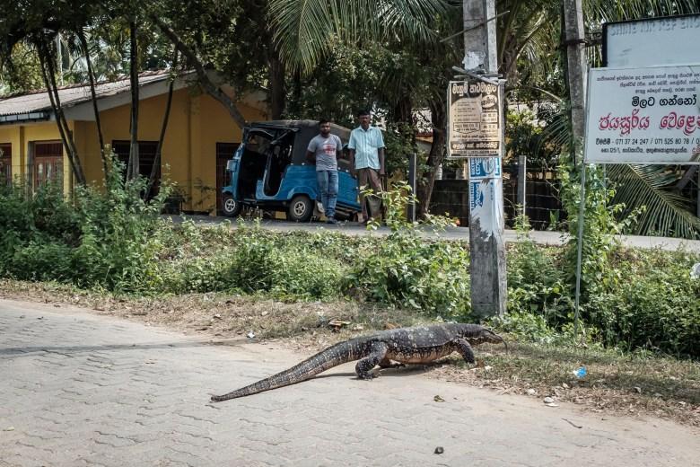 Sri Lanka Mirissa 01
