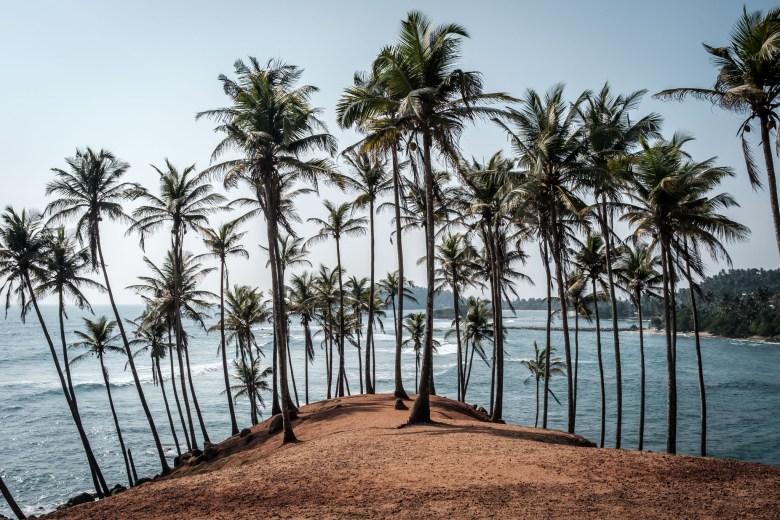 Sri Lanka Mirissa 39