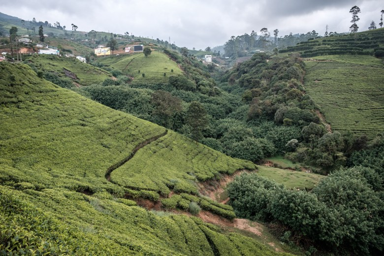 Sri Lanka Nuwara Eliya 71