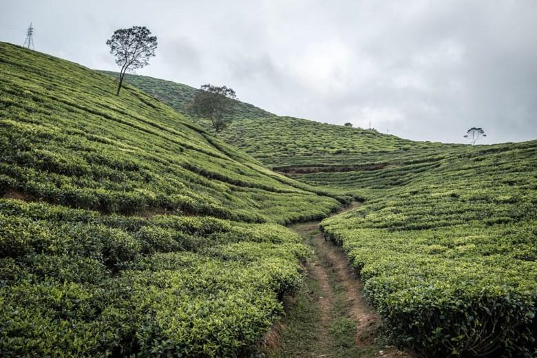 Sri Lanka Nuwara Eliya 73