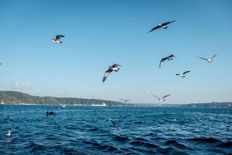 Turkey Istanbul 049