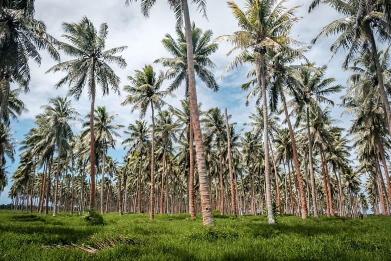 Vanuatu Efate 107