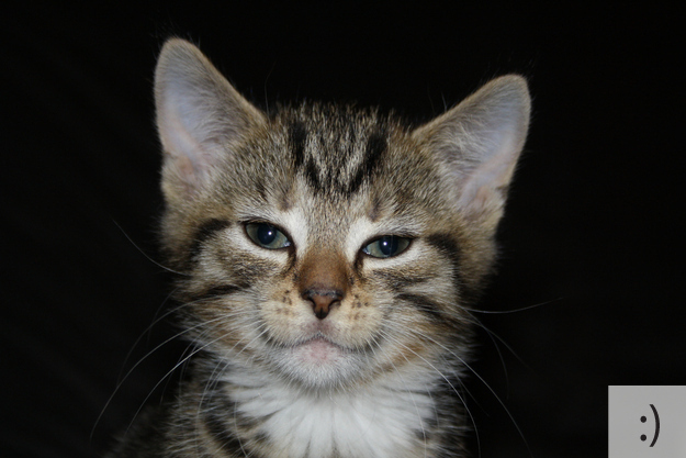 Free Cute Kitten Wallpapers The 20 Super Cute Kittens As Emoticons