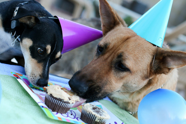 Cutest Love Quotes Wallpapers 30 Dogs Celebrating Birthday With Special Dog Birthday Cakes