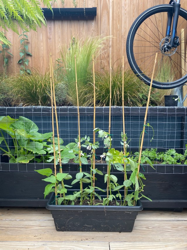 Grow your own veggies in this rolling veggie patch.
